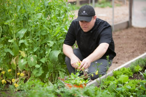 Executive Chef Josh Tomson in the Hoop House