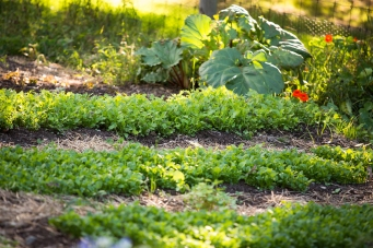The Blackmore Farm-to-Table Garden at The Lodge at Woodloch