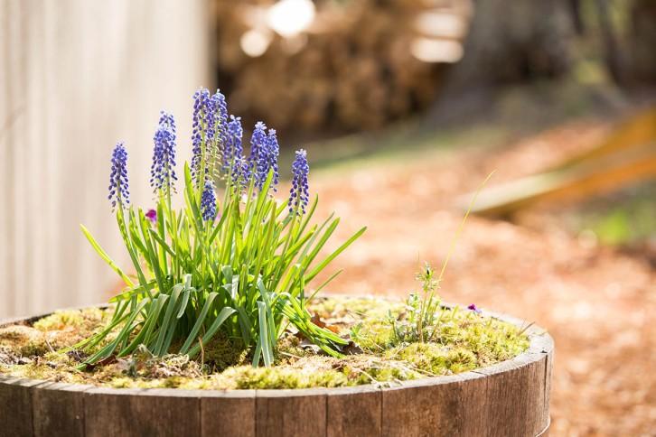 TLAW- Spring Flowers- AKP