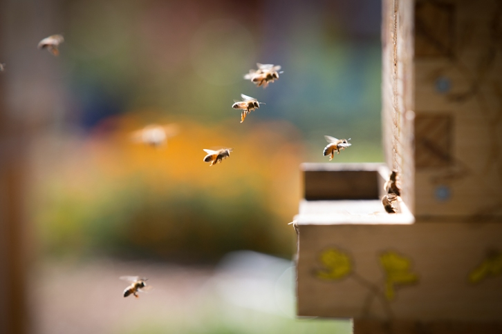 bees-4